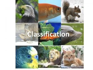 Classification Classification the scientific process of arranging organisms