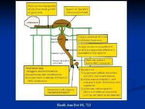 Heath Ann Bot 80 713 Differences between animalsplants