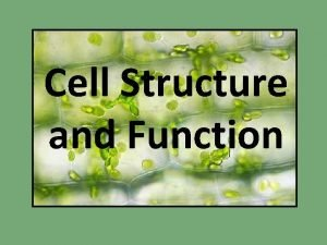 Cell Structure and Function Representative Plant Cell Representative