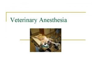 Veterinary Anesthesia Terminology n Anesthesia vs sedation n