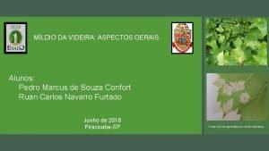 MLDIO DA VIDEIRA ASPECTOS GERAIS Alunos Pedro Marcus