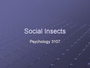 Social Insects Psychology 3107 Introduction Many Insects live