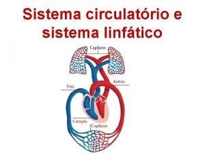Sistema circulatrio e sistema linftico Sangue Constitudo por