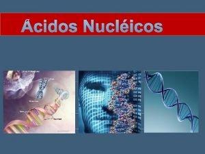 cidos Nuclicos Introduo Os cidos nuclicos so responsveis