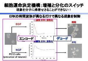 RasERK Transient ERK activation EGF Sustained ERK activation