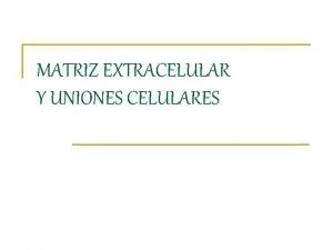 MATRIZ EXTRACELULAR Y UNIONES CELULARES Matriz Extracelular MEC