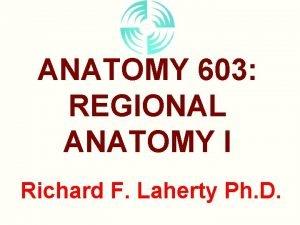 ANATOMY 603 REGIONAL ANATOMY I Richard F Laherty