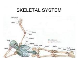 SKELETAL SYSTEM HUMAN SKELETAL SYSTEM CLASSIFICATION OF BONES