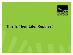 This Is Their Life Reptiles This Is Their