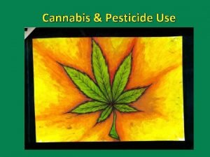 Cannabis Pesticide Use An agricultural crop Division 4