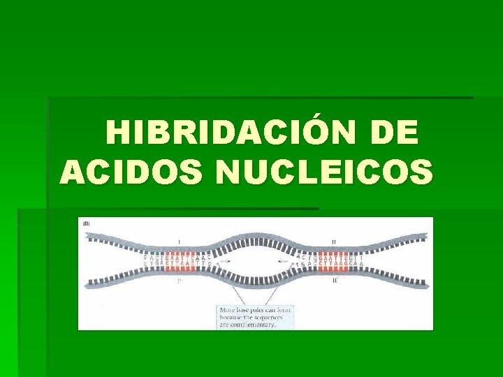 HIBRIDACIN DE ACIDOS NUCLEICOS Hibridacin de cidos Nucleicos