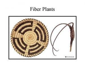 Fiber Plants Vascular Cells Cellulose Fibers Plant Fibers