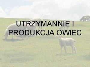 UTRZYMANNIE I PRODUKCJA OWIEC Produkcja owczarska produkcja jagnit