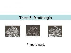 Tema 6 Morfologa Primera parte Morfologa La morfologa