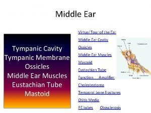 Middle Ear Virtual Tour of the Ear Middle