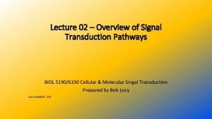 Lecture 02 Overview of Signal Transduction Pathways BIOL