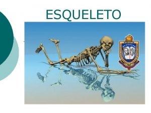 ESQUELETO ESQUELETO HUMANO Consta de 206 huesos 8