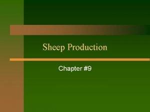Sheep Production Chapter 9 Why choose sheep Sheep