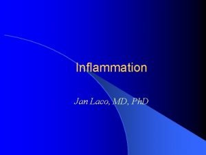 Inflammation Jan Laco MD Ph D Inflammation l