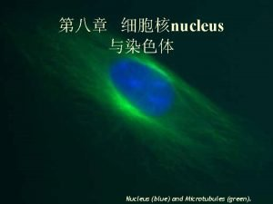 nucleus Nucleus blue and Microtubules green Nucleus and