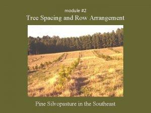 module 2 Tree Spacing and Row Arrangement Pine