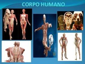 CORPO HUMANO v O CORPO HUMANO FORMADO POR