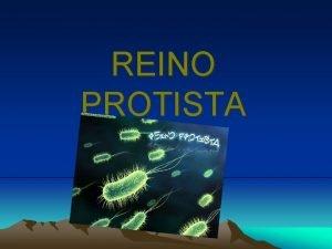 REINO PROTISTA Clasificacin Los protistas comprenden alrededor de