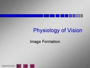 Physiology of Vision Image Formation Suzanne DAnna 1