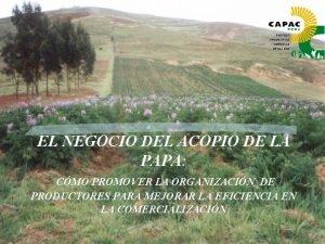 EL NEGOCIO DEL ACOPIO DE LA PAPA CMO