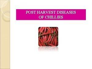 POST HARVEST DISEASES OF CHILLIES Post harvest diseases