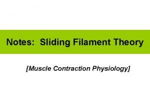 Notes Sliding Filament Theory Muscle Contraction Physiology 1