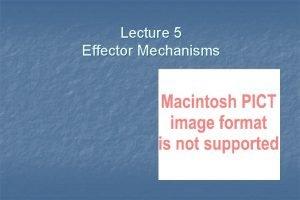 Lecture 5 Effector Mechanisms Host Defense Innate Defense