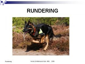 RUNDERING Rundering Norsk Schferhund Klub HBU 2009 INNLEDNING