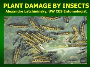 PLANT DAMAGE BY INSECTS Alexandre Latchininsky UW CES