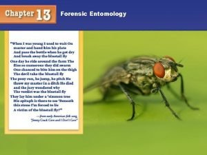 Forensic Entomology Taxonomy Classification of Things in an