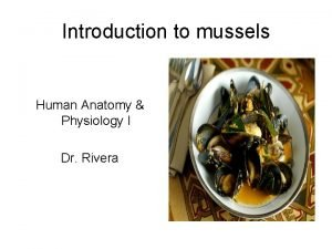 Introduction to mussels Human Anatomy Physiology I Dr