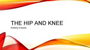 THE HIP AND KNEE Anatomy Injuries THE HIP