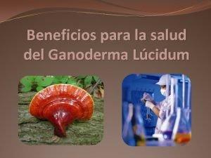 Beneficios para la salud del Ganoderma Lcidum Beneficios