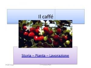 Il caff Storia Pianta Lavorazione IPSSAR Barga I