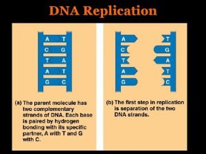 DNA Replication DNA Replication II Three models proposed