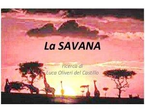 La SAVANA ricerca di Luca Oliveri del Castillo