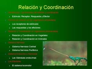 Relacin y Coordinacin Introduccin Las funciones de relacin