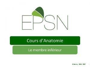 Cours dAnatomie Le membre infrieur E Boullay 2016
