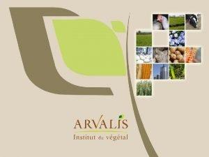 Agrocologie quelle ralit et quelle stratgie pour ARVALIS