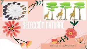 SELECCIN NATURAL Elaborado por Lc Mirian Garca Seleccin