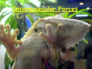 Intermolecular Forces Relative Magnitudes of Forces The types