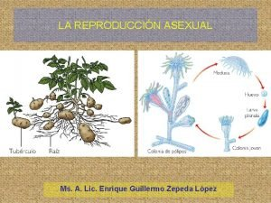 LA REPRODUCCIN ASEXUAL Ms A Lic Enrique Guillermo