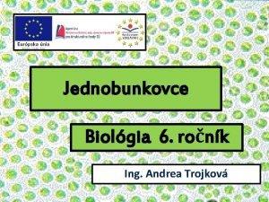 Jednobunkovce Biolgia 6 ronk Ing Andrea Trojkov Jednobunkov