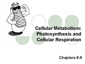 Cellular Metabolism Photosynthesis and Cellular Respiration Chapters 8