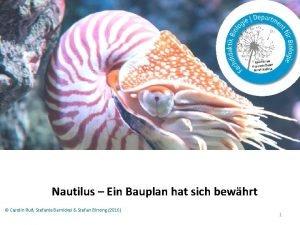 Nautilus Ein Bauplan hat sich bewhrt Carolin Ru